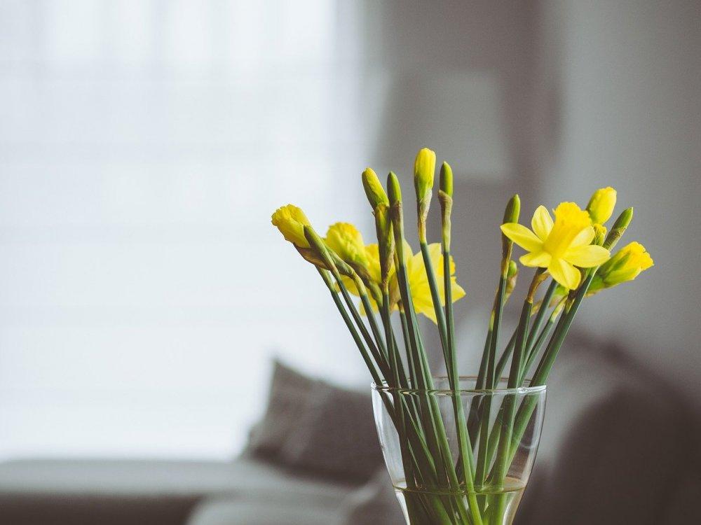 Skapa en härlig atmosfär i hemmet med hjälp av luftfräschare